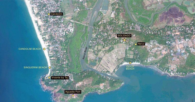 Solidago - Location map