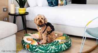 QT Hotels and Resorts in New Zealand Opens its suites to Furry Guests.
